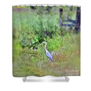 Great Blue Heron Visitor Shower Curtain