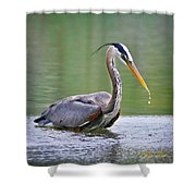Great Blue Heron Wading Shower Curtain