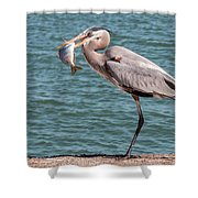 Great Blue Heron Walking With Fish #2 Shower Curtain