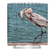 Great Blue Heron Walking With Fish #3 Shower Curtain