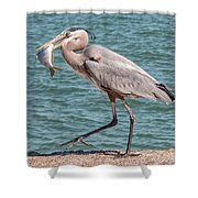 Great Blue Heron Walking With Fish #4 Shower Curtain