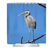 Great Blue Heron Watching And Waiting Shower Curtain