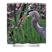 Great Blue Heron With His Catch Shower Curtain