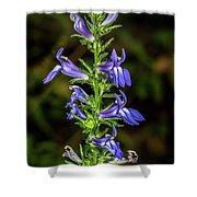 Great Blue Lobelia Shower Curtain