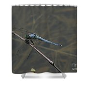 Great Blue Skimmer Dragonfly Shower Curtain