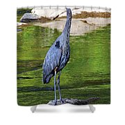 Great Blue Wading The Tuck Shower Curtain