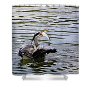 Great Blue With A Drum Shower Curtain