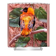 Great Colored Bird Shower Curtain