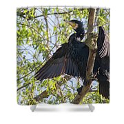 Great Cormorant - High In The Tree Shower Curtain