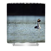 Great Crested Grebe Shower Curtain