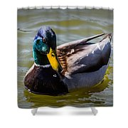 Great Day For A Swim Shower Curtain