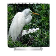 Great Egret 17 Shower Curtain