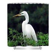 Great Egret 19 Shower Curtain