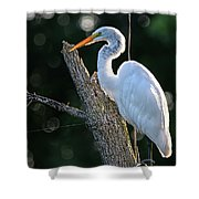 Great Egret At Rest Shower Curtain