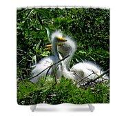 Great Egret Chicks 1 Shower Curtain