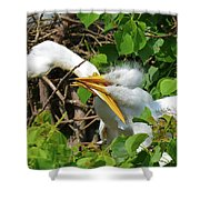 Great Egret Chicks And Mom Shower Curtain