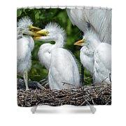 Great Egret Chicks Shower Curtain