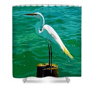 Great Egret Emerald Sea Shower Curtain