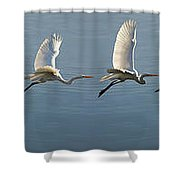 Great Egret Flight Sequence Shower Curtain