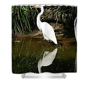 Great Egret  Shower Curtain