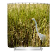 Great Egret In The Morning Dew Shower Curtain