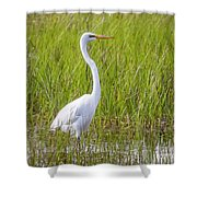 Great Egret In The Spring  Shower Curtain