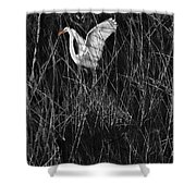 Great Egret Inthe Marsh Shower Curtain