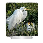 Great Egret Mom And Babies Shower Curtain