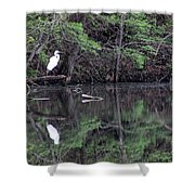 Great Egret Resting Shower Curtain