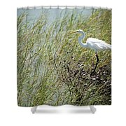 Great Egret Through Reeds Shower Curtain