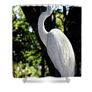 Great Egret Up Close Shower Curtain
