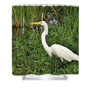 Great Egret Walking Shower Curtain