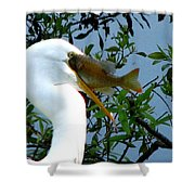 Great Egret With Catch 2 Shower Curtain