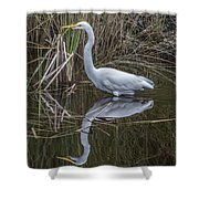Great Egret With Reflection Shower Curtain