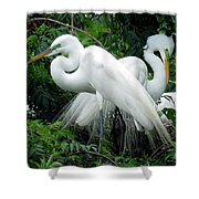 Great Egrets 10 Shower Curtain