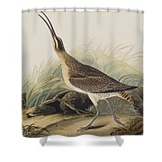 Great Esquimaux Curlew Shower Curtain