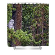 Great Gray Owl Perched Shower Curtain