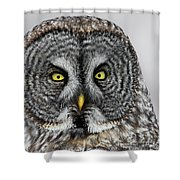 Great Gray Owl Portrait Shower Curtain