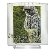 Great Grey Owl Shower Curtain