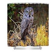 Great Grey Owl Portrait Shower Curtain