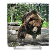Great Grizzly's Shower Curtain