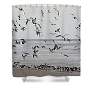 Great Gull Group On The Beach Shower Curtain
