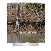 Great Heron And Turtles  Shower Curtain