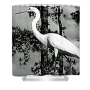 Great Heron Shower Curtain
