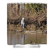 Great Heron Turtles And Grebe Duck  Shower Curtain