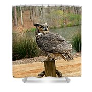 Great Horned Owl 1 Shower Curtain