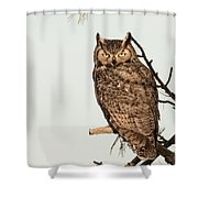 Great Horned Owl At Dusk Shower Curtain