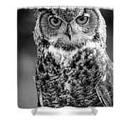 Great Horned Owl Bw IIi Shower Curtain