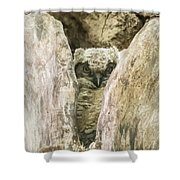 Great Horned Owl Chick Shower Curtain