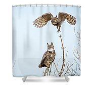 Great Horned Owl Couple Shower Curtain